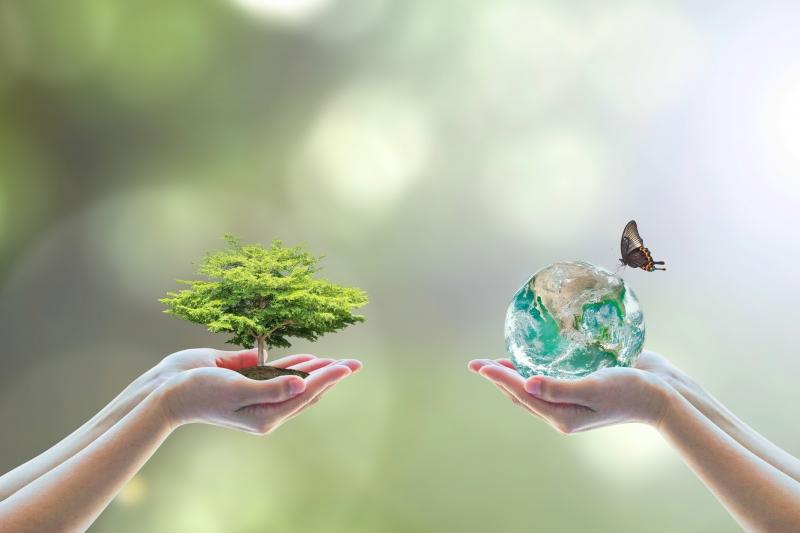 Stora Enso det mest hållbara företaget